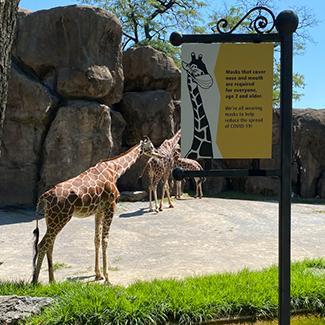 Giraffe at Philadelphia Zoo